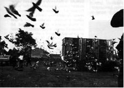 Antonio Paradiso, Navigazione dei colombi,1975